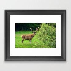 Stag 2/3 Framed Art Print