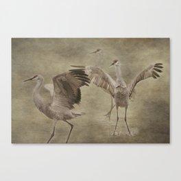 Three Cranes Dancing Canvas Print