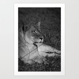 The Lioness Art Print