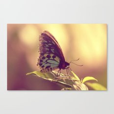 Butterfly 02 Canvas Print