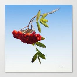 Rowan Tree Branch Canvas Print
