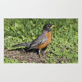 American Robin in the Grass Rug