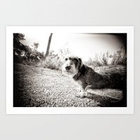 daCKEL DOG#4 Art Print