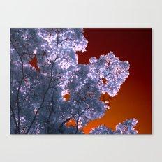 night colors III Canvas Print