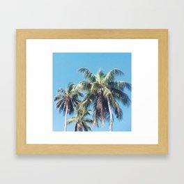 Palms of Puerto Rico  Framed Art Print