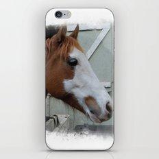 Arthur iPhone & iPod Skin
