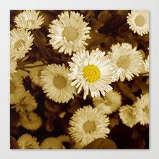 little daisy Canvas Print