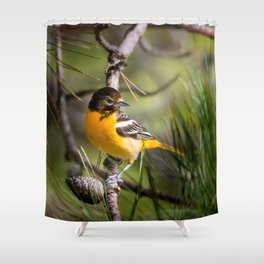 Oriole and Pine cone Shower Curtain