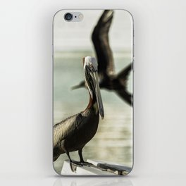 Pelican Photobombed by a Frigatebird iPhone Skin