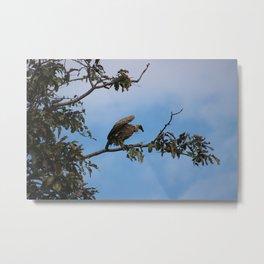 Vulture on start Metal Print