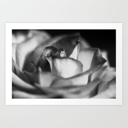 A Rose Of A Different Color Art Print