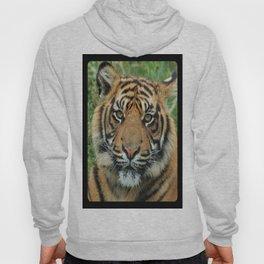 Graceful Gaze 🐾 Bengal Tiger Hoody