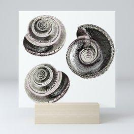 Life is a pattern - Shell like Mini Art Print