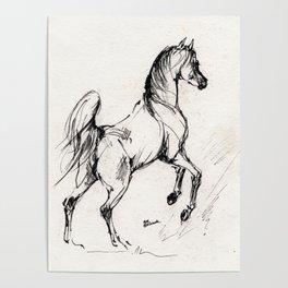 Jumping arabian horse Poster
