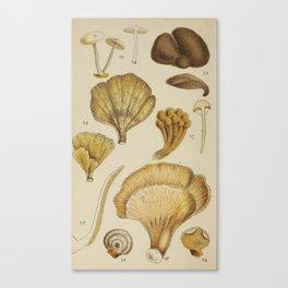 Naturalist Mushrooms Canvas Print