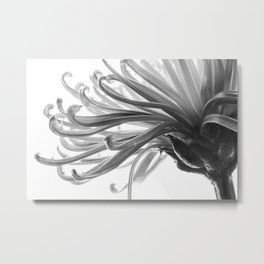 Spider Mum Black and White 2 Metal Print