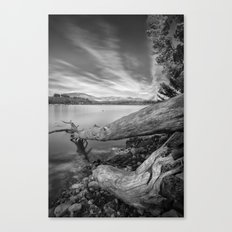 Big roots, time traces Canvas Print