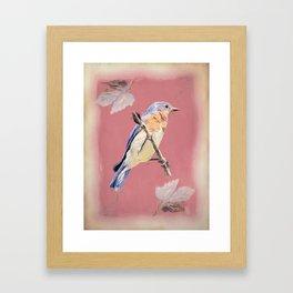Bluebird Songbird Blue Bird Cottage Chic Country Art A356 Framed Art Print
