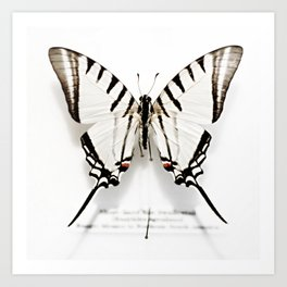BUTTERFLY | FIG. 01 Art Print