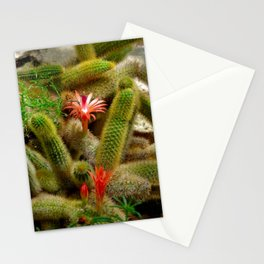coral cactus - brightly lit blossom Stationery Cards