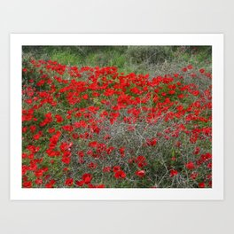 Beautiful Red Wild Anemone Flowers In A Spring Field  Art Print