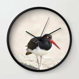 Common Oystercatcher (Haematopus palliatus) Wall Clock