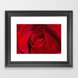 Rose Bud Framed Art Print