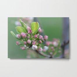 Flower Photography Metal Print