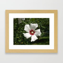 Hibiscus, White Framed Art Print