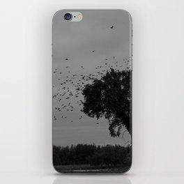 Black birds at flight iPhone Skin