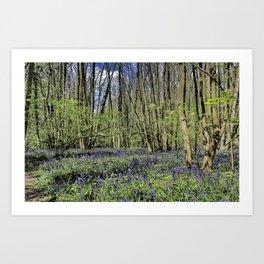 Everdon Stubbs Wood Bluebells Art Print