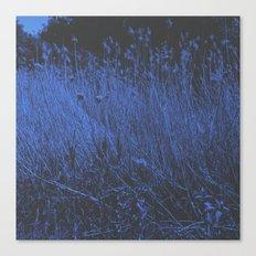 Blue Jay Whey Canvas Print