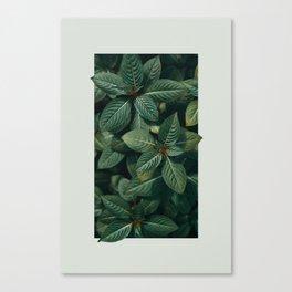 Growth III Canvas Print