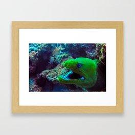 Moray Eel Framed Art Print