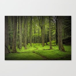 A Woodland Path in Cades Cove Canvas Print