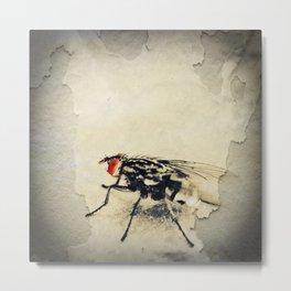 Fly Eye Closeup of a Fly Metal Print