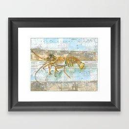 Red Lobster Framed Art Print