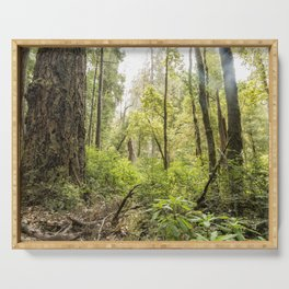 Schrader Old Growth Forest Serving Tray