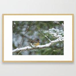 Male Varied Thrush, No. 2 Framed Art Print