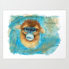 Rhinopithecus roxellana Art Print