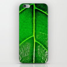 Green Leaf iPhone & iPod Skin
