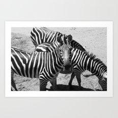 ~Zebra Stripes~ Art Print