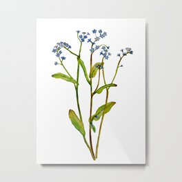 Forget-me-not flowers watercolor art Metal Print
