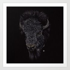 Bison / Buffalo Art Print