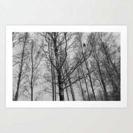 Lonely Crow Woods Art Print