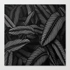 Night Tropic 5BW Canvas Print