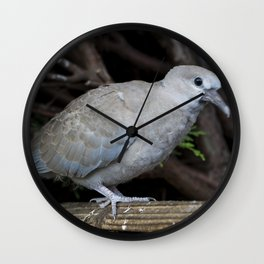 Baby Collared Dove Wall Clock