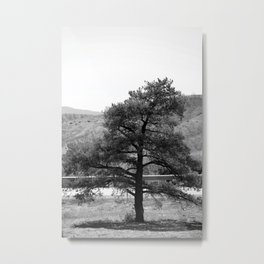 Single Leaning Pine in Black and White Metal Print