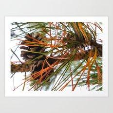 Pine Cone in Pine Tree Art Print