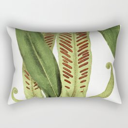Asplenium Vulgare from Ferns British and Exotic (1856-1860) by Edward Joseph Lowe Rectangular Pillow